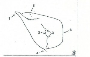 adonis fig 3