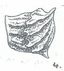 adonis fig 4