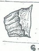 adonis fig 6