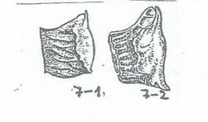 adonis fig 7