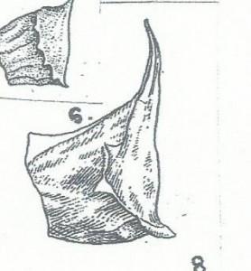 adonis fig 8