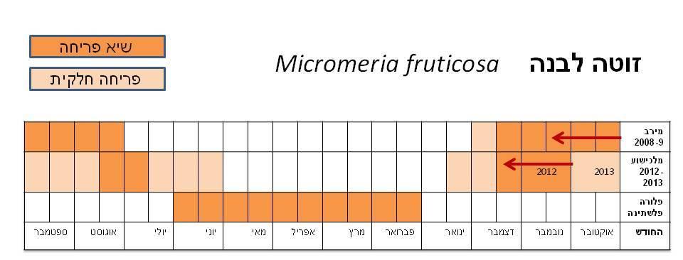 micromeria fruticosa