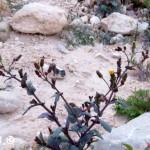סביון צהוב 20.1.16 נ-תמר-אמצעי ש-דדון-1