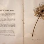 פרחים מיובשים שפרירה 13