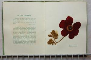 פרחים מיובשים 10