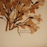 פרחים מיובשים 16