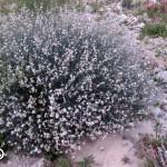 פרסטיה מצרית 20.1.16 נ-תמר-אמצעי ש-דדון-1