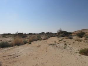 מכתש החול בנחל שיזף. גדי פולק ©