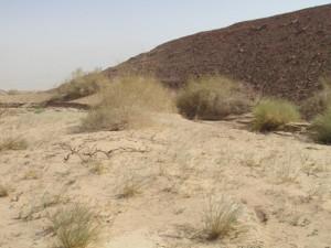 חולות ליד הר הטפל בשליטת עציון פרסי. גדי פולק ©