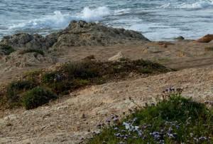 חוף חצרות יסף - שבי ציון. צילם: ישי שמידוב ©
