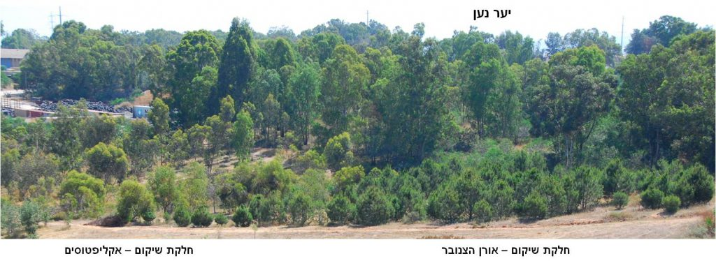 יער נען ושטח השיקום ממזרח לסתריה. צילמה: סימה קגן ©