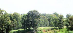 יער נען - שטח קרקע חרסיתית בקרחות יער. צילם: גדי פולק ©