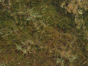 טובענית קטומה בבריכה מצפון למאגר עורבים. צילום: דרור מלמד ©