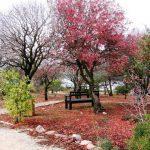 הגן הבוטני בהר הצופים, אלה בלבלוב.. צילום: מיכל מונוסוב ©