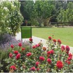 הגן הבוטני גן וואהל לוורדים בירושלים. ארכיון הגן