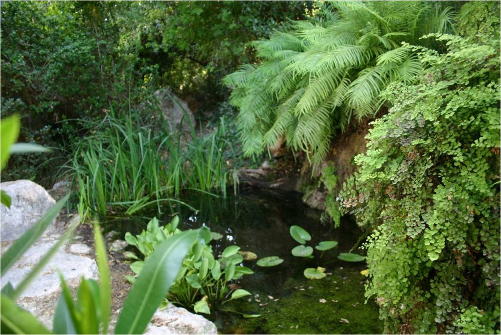 """גן צמחי ארץ-ישראל בנתב הל""""ה. צילום: עופר הוכברג ©"""