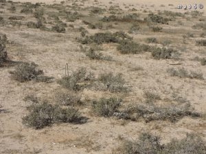 חברת חמד המדבר על הלס. צילום: יעל אורגד ©