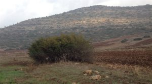 אשמר קוצני בנחל יפתחאל, צילם שמואל מזר