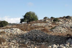 ערמות סיקול אבנים. צילם: זאב שביט ©