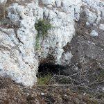 אלת מסטיק קטנה בסדק סלע מעל פתח מערה חסום ברובו בגבעת יודפת העתיקה. צילום: אבי שמידע ©