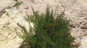 בן-טיון בשרני בחוף הים באי מלטה. צילם: גדי פולק ©