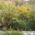 אדר מילני בחברת ערבה מחודדת לאורך גדת הירדן ההררי. צילם אוהד כהן ©