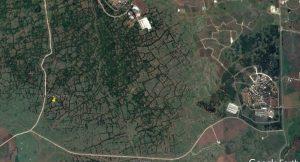 תצלום Google earth של יער אודם דרומי בו העצים גדלים רק בשולי הטרסות