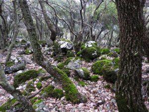 יער אודם. צילמה: אראלה הרי ©
