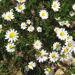 קחוון החוף 19-3-2012 עין החורש גדי פולק
