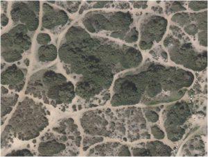 שטח המחקר בחולות אביחיל. מקור: אתר המפות הממשלתי http://www.govmap.gov.il/home.