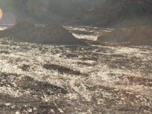 """מרבדי """"פלומה"""" של מלענן שעיר-גלומה בהר שחמון - בקעת נטפים. צילם: מורי חן ©"""