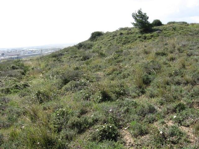 הגבעה האדומה - גבעת ברנר. צילם: גדי פולק ©