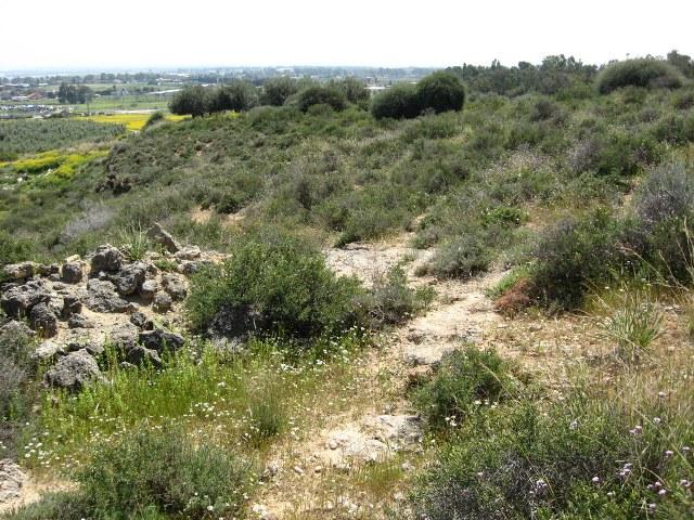 גבעת ברנר - גבעה דרומית (שום עקרון). צילם: גדי פולק ©. צולם ב-2010.