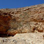 אלה אטלנטית במעלה עקוף. עץ עם ענף חי, 2011. צילם: בני שלמון ©;