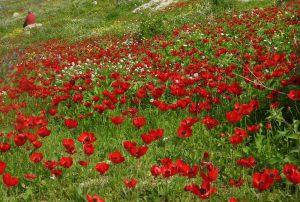 נורית אסיה. צילמה: אראלה הרי ©