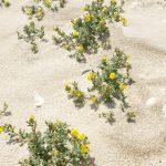 שברק ססגוני. צילם: עוז גולן ©