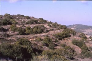 חורש פתוח בהרי יהודה. צילם: גדי פולק ©