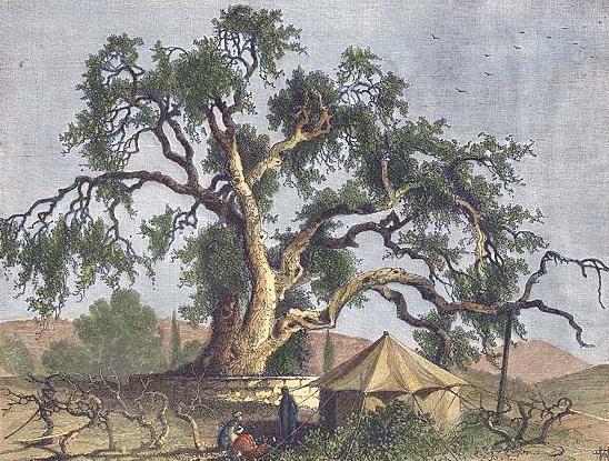 """""""אשל אברהם"""" – שאינו אלא עץ אלון, בחברון, ציור מהמאה ה-19. צביעה Steve Bartrick"""