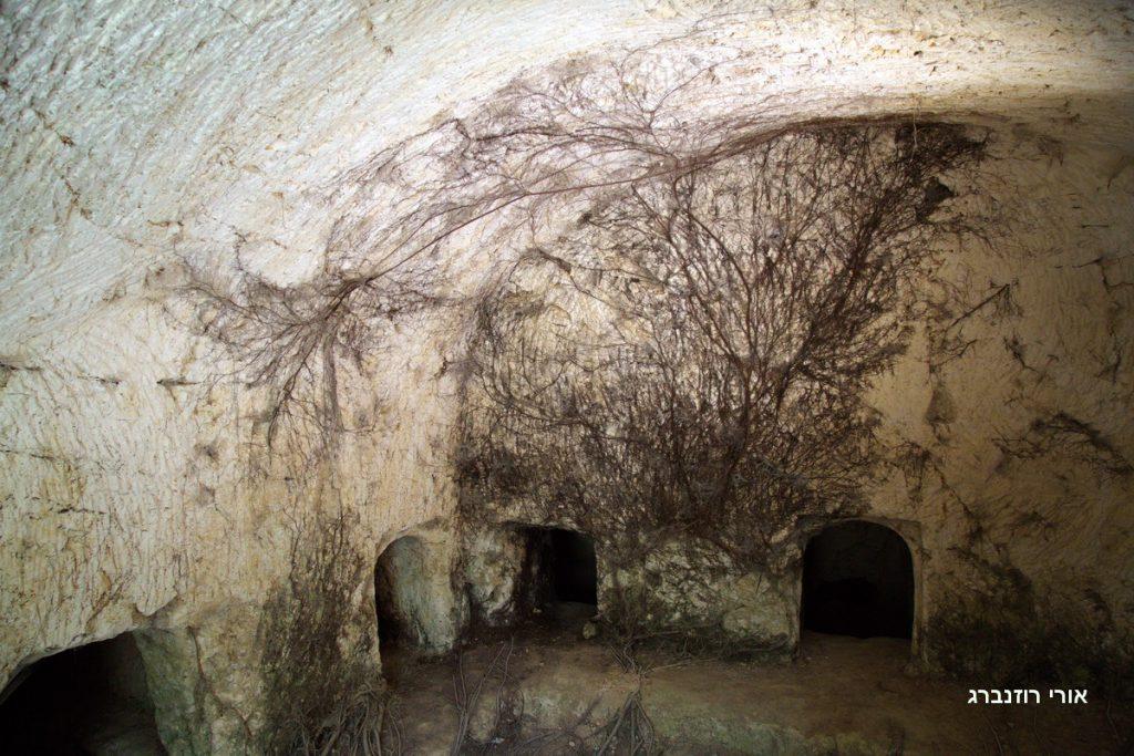 שורשי עץ התאנה המכסים את קירות מערת הקבורה. צילם: אורי רוזנברג©