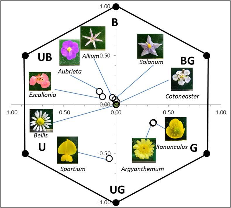 Read more about the article מאיזה מרחק רואה דבורה פרח? מרחק הגילוי המירבי של פרחים טבעיים על-ידי דבורי בומבוס