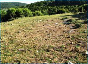 עשבוניים באביב בהר מירון בממשק רעיית חורף – כמעט ללא ביומסה צמחית ופריחה מועטה. צילמה: טליה אורון©