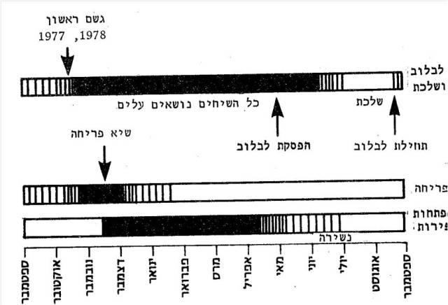 שלבים פנולוגים באוג קוצני. מתוך: פולק, ג. 1983. אוג קוצני בישראל. רתם 6: 31-17.