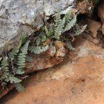 שרכרך הסלעים. צילם: איתן שפירא ©