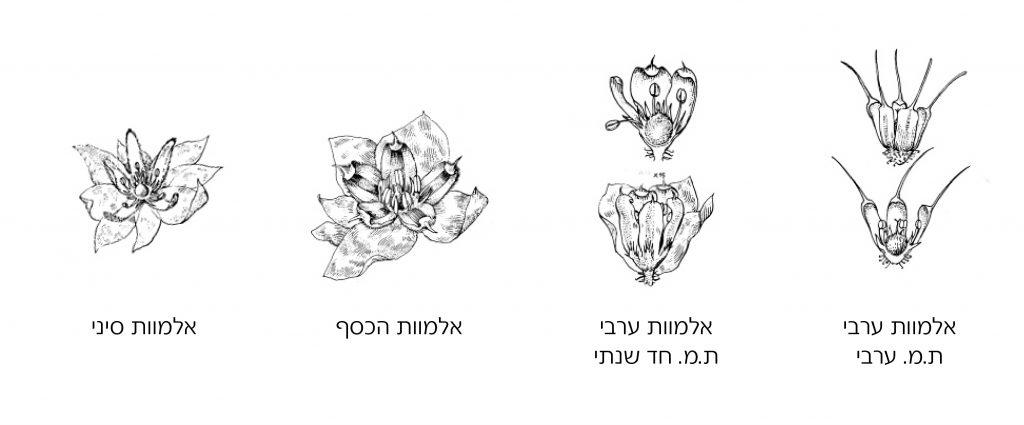פרחים של מיני אלמוות
