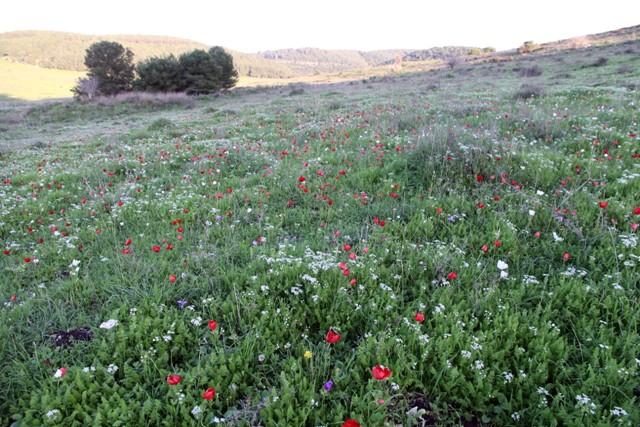 נחל סנין ועמק השלום. צילם: אורי פיק ©