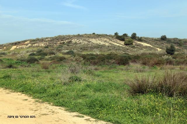 רכס הכורכר: גבעות נס-ציונה - בית עובד. צילמה: ערגה אלוני ©