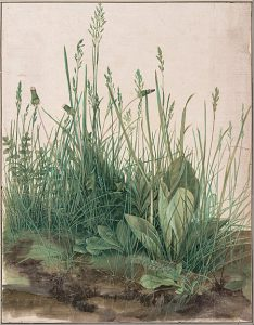 """ציור של Albrecht Dürer – """"חתיכת דשא גדולה"""""""