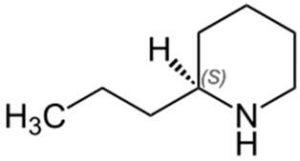 מבנה מולוקלת הקונין