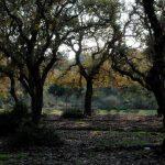 על יערות אלון התבור ברמת מנשה ובשרון