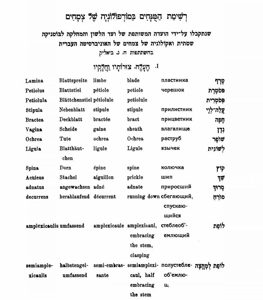 העמוד הראשון ברשימת המונחים במורפולוגיה של צמחים – 1930. מקור: אתר האקדמיה העברית ללשון.
